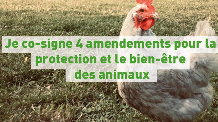 Je co-signe 4 amendements pour la protection et le bien-être des animaux – 7 octobre 2020